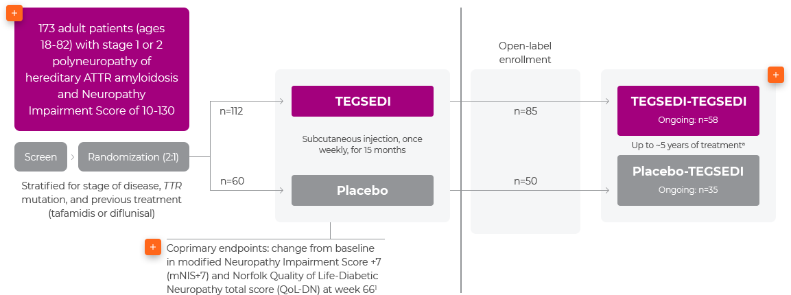 Neuro-TTR study design placebo vs. TEGSEDI® (inotersen)